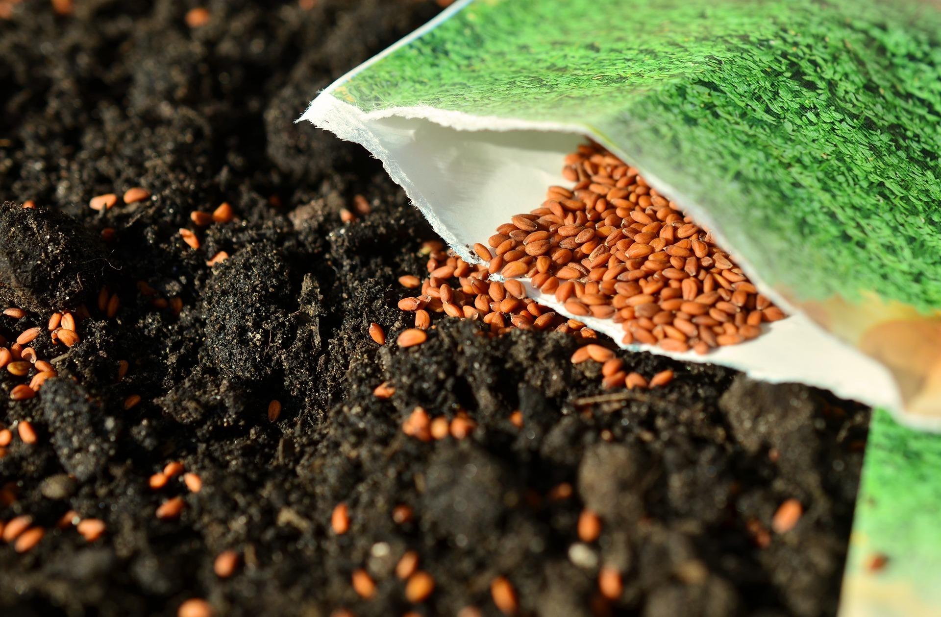 Seeds 1302793 1920
