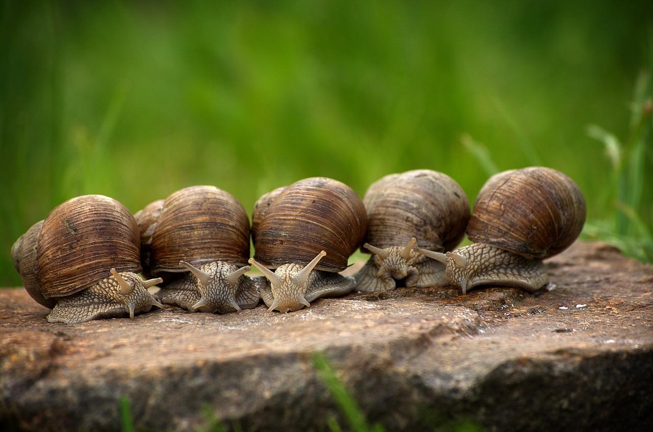Snail 2983235 1280