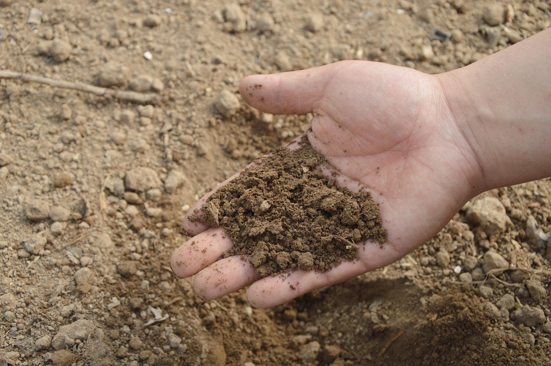 Soil 766281 1920