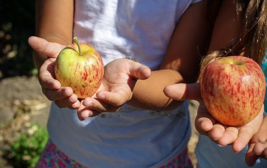 Zum kvietimas darzeliams ekologiskas maistas